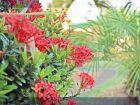 Flores embelezam canteiros