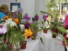 Feira de Orquídeas oferece opções para o Dia das Mães
