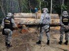 Força Nacional vai reforçar combate ao desmatamento