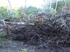 Fazendeiro é multado em R$ 11 mil por exploração de madeira