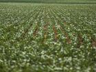 Produção brasileira de grãos deverá crescer 21,5% em 10 anos