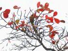 Arara Canindé, das belezas sul-mato-grossenses