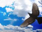 De asas abertas