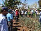 Projeto de cultivo de cebola é aplicado em assentamento