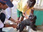 Campanha de vacinação contra raiva deve imunizar 20 mil animais em Três Lagoas