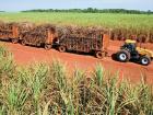 Usina Coururipe anuncia aumento do plantio de cana-de-açúcar em Paranaíba