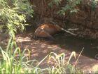 Cavalo morto em córrego de Três Lagoas é carregado por enxurrada