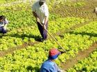 1ª Feira Estadual da Reforma Agrária será realizada na Capital