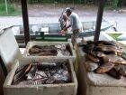 Três homens são presos e multados em R$ 60 mil por pescar durante piracema