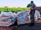 Proprietário rural é multado por armazenamento de embalagens de agrotóxicos