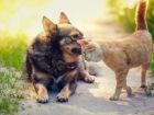 7 cuidados que você deve ter com seu gato ou cão no calor