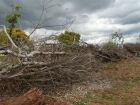 Pecuarista paulista é multado em R$ 7 mil por desmatamento ilegal