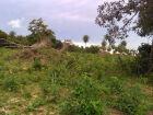 Fazendeiro é autuado por desmatamento ilegal em Bela Vista