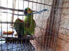 Idoso atira em papagaio e ameaça disparar em vizinho