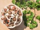 Moringa pode purificar a água e ainda combater a desnutrição