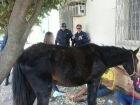 Carroceiro bêbado é flagrado na contramão e acaba detido por maus-tratos a cavalo
