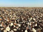 Centro-Oeste lidera produção agropecuária brasileira