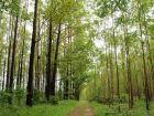 Exportações: Venda de produtos florestais cresce e já é segundo da balança do agro