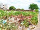 Mais de 400 donos de terrenos baldios serão notificados via Diário Oficial