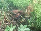 Canal entupido e mato alto dificulta vida de moradores