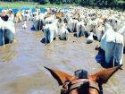 Após cheia, nível do Rio Paraguai deve baixar mais lentamente no Pantanal de MS