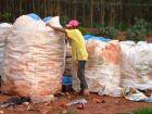 Sem lixão, catadores ficam sem fonte de renda