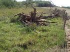 Fazendeiro é multado R$ 4,5 mil por derrubada de árvores nativas