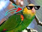 O provável fim da 'papagaiada eleitoral' também em Paranaíba