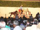 Cavalos pantaneiros são vendidos com preço médio de R$ 14,6 mil durante Feapan