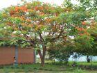 Quarta-feira será de muitas nuvens e possibilidade de chuva em Paranaíba