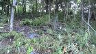 Comerciante é autuado por derrubar vegetação ilegalmente em Bonito