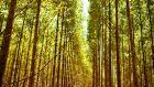 Fábrica de celulose contrata 34 trabalhadores para a área florestal