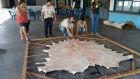 Sindicato Rural de Paranaíba realiza curso de preparo do couro