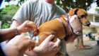 Àgua Clara realiza Campanha de Vacinação Antirrábica