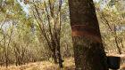 Plantio de florestas cresce na Costa Leste com apoio do Senar