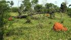 Pecuarista é multado por desmatamento ilegal em Nioaque
