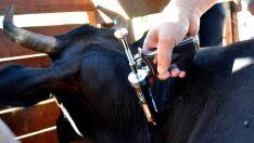 Vacinação contra febre aftosa tem inicio dia 1º de maio