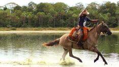 Pesquisa comprova extensa variabilidade genética de cavalo Pantaneiro