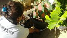 Costa Leste representa mais de 18% dos casos de dengue em MS