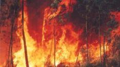 Região de Três Lagoas é uma das mais atingidas por incêndios florestais