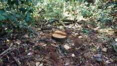 Fazendeiro é autuado por exploração de madeira
