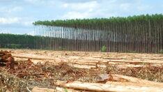 Aumento de produtividade é uma necessidade no cenário florestal