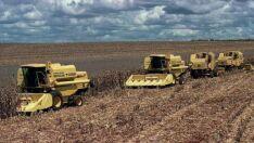 Brasil prevê safra recorde de grãos: 242,1 milhões de toneladas