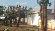 Paranaibenses se revoltam com poda drástica de árvores