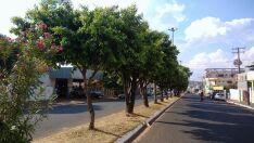 """""""Nossas árvores nunca foram podadas"""", diz secretário de Meio Ambiente"""