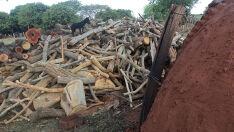 Proprietários rurais são multados por exploração ilegal de madeira