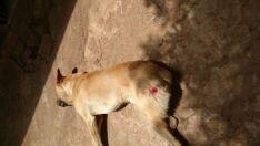 Homem mata cachorro após animal atacar galinhas no Assentamento Serra