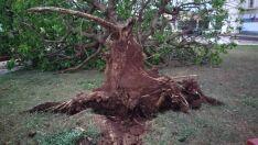 Vendaval faz vítima e deixa rastro de estragos em Paranaíba