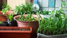 Temperos, verduras, legumes, frutas: como ter uma horta em casa