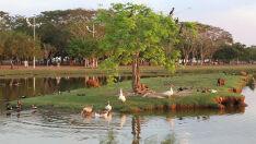 A natureza em harmonia na Lagoa Maior
